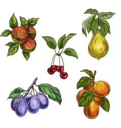 garden fruits with leaves and branches c vector image