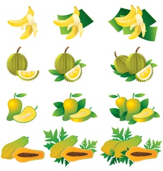 Banana Durian Mango Papaya vector
