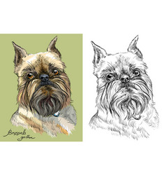 Colored and black and white brussels griffon dog vector