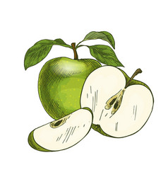 Green apple with leaf and half of fruit vector