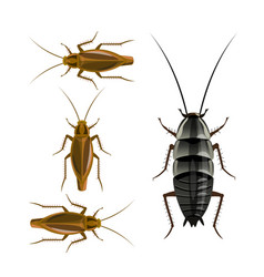 Oriental and german cockroaches vector
