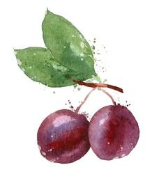 Plum logo design template fruit or food vector