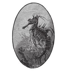 Sea horse vintage vector