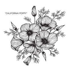 California poppy flower drawing vector