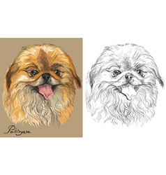 colored and black and white pekingese dog vector image