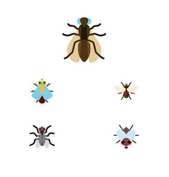 Flat icon housefly set of tiny buzz mosquito and vector
