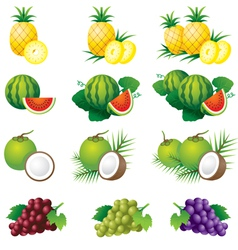 Pineapple Watermelon Coconut Grape vector image