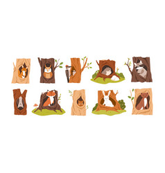 Set animals and birds inside hollows squirrel vector