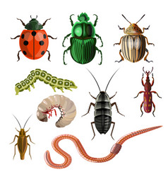Set of different insects vector