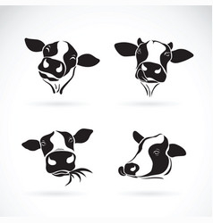 group of a cow head design on white background vector image