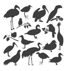 set of birds silhoettes vector image