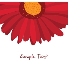Burgundy red gerbera flower on a white background vector