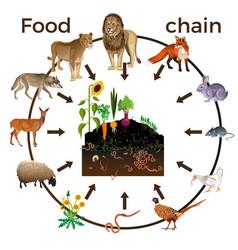 Food chain animals vector