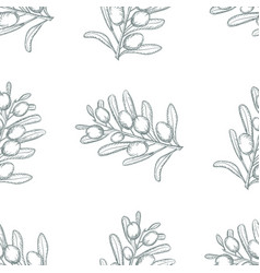 olive sketch branch seamless background over white vector image