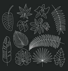 tropical leaves floral tropical elements outline vector image