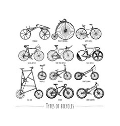 types of bikes vector image