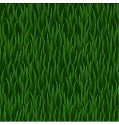 green grass field seamless background vector image