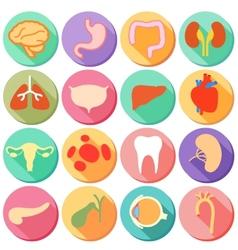 Internal organ and Body Parts vector image vector image