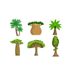 jungle trees and palms set tropical forest plants vector image