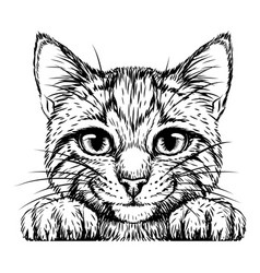 kitten wall sticker vector image