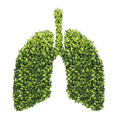 lungs with green leaf vector image