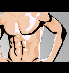 male torso vector image