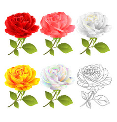 Rose set red pink white yellow multicolored vector