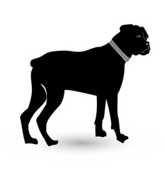 rottweiler pet dog icon vector image