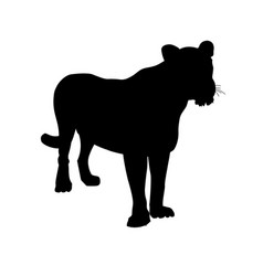 Silhouette lioness vector