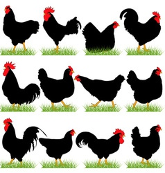 12 Roosters and Hans Silhouettes Set vector image