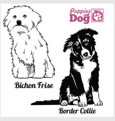 Bichon frise and border collie puppy sitting vector