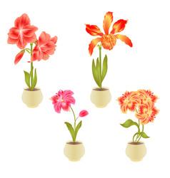 blooming amaryllis cattleya alstroemeria flowers vector image