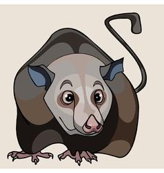 Cartoon rat brown vector