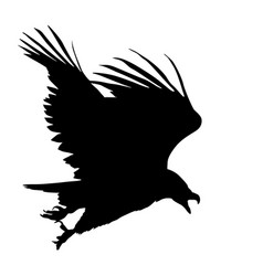 Silhouette beautiful eagle on a white background vector