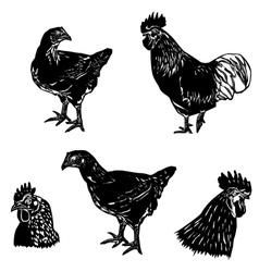 chicken siluet2 vector image