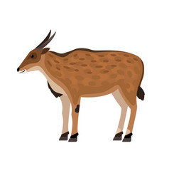 antelope with horns vector image