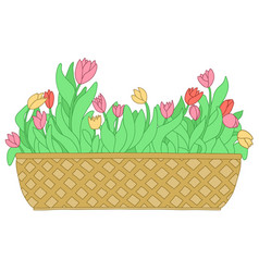 Cartoon pink red yellow tulip in long flower box vector