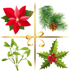 Christmas plants vector