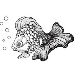 goldfish3 vector image