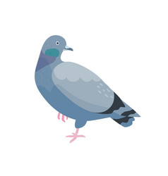 grey pigeon flat bird vector image