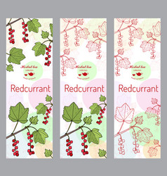 herbal tea collection red currant banner set vector image