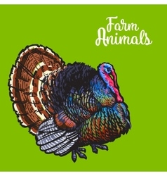Isolated sketc farm turkey on a background vector image