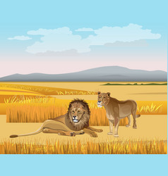Lioness and lion in savanna vector