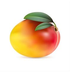 Mango fruit with leaves vector
