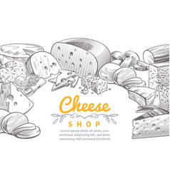 sketch cheese background tasty cheeses brie feta vector image