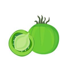 big ripe green fresh half tomato vector image