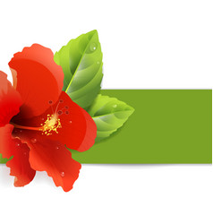 floral background with hibiscus vector image