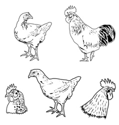 chicken siluet vector image