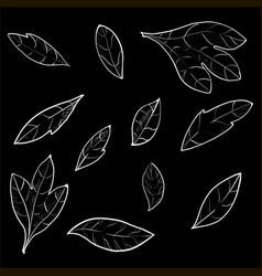 Collection of foliage and branches vector