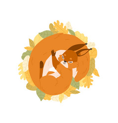 Cute happy squirrel sleeping on autumn leaves vector
